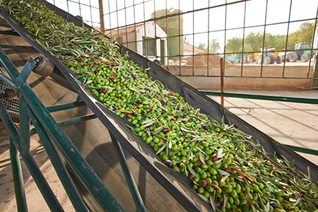 The Olive Oil Mill